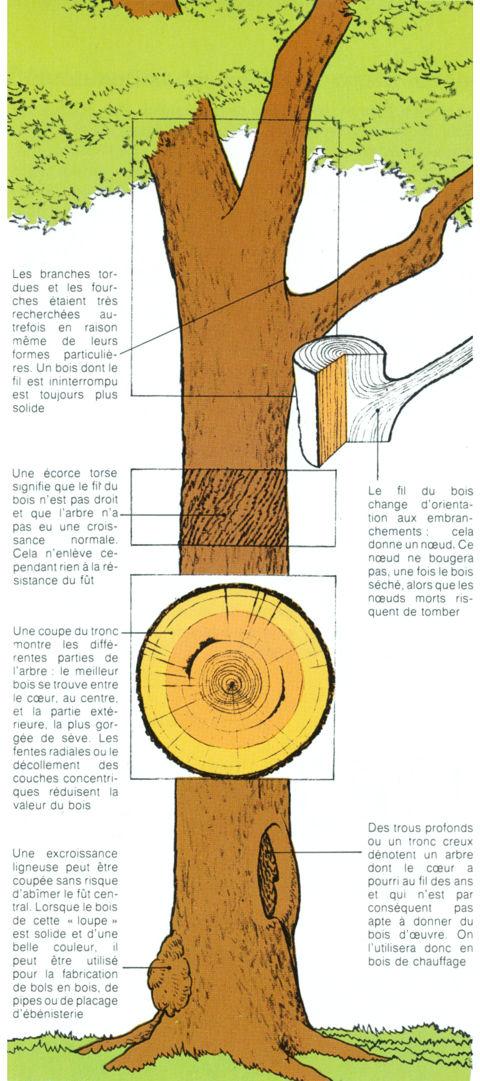 Comment avoir un bois de qualit - Comment couper les branches d un arbre ...