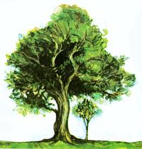 Comment prot ger les arbres - Comment proteger les arbres fruitiers du gel ...